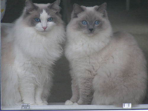 040329cats